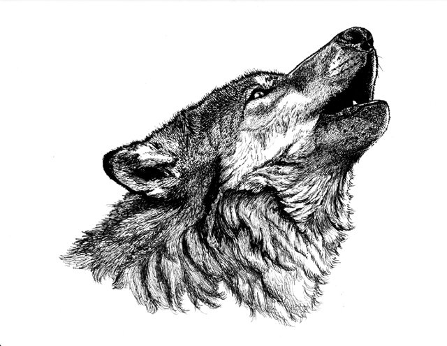 Black Wolf Howling Drawing Little House in...